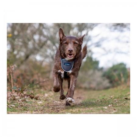 Trépied Mobile Bleu flexible