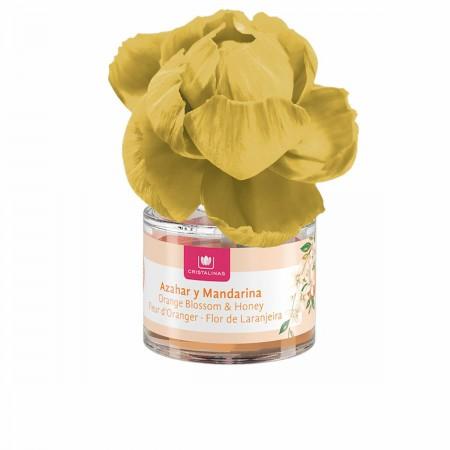 Coupe originale Zolo ZOLOO